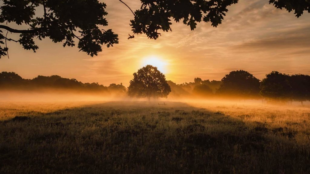 Image of a tree in a field at sunrise for Dr. Linda C. Salvin's post on destiny