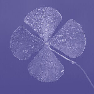 Four-leaf clover signifying good luck power from Dr. Linda Salvin