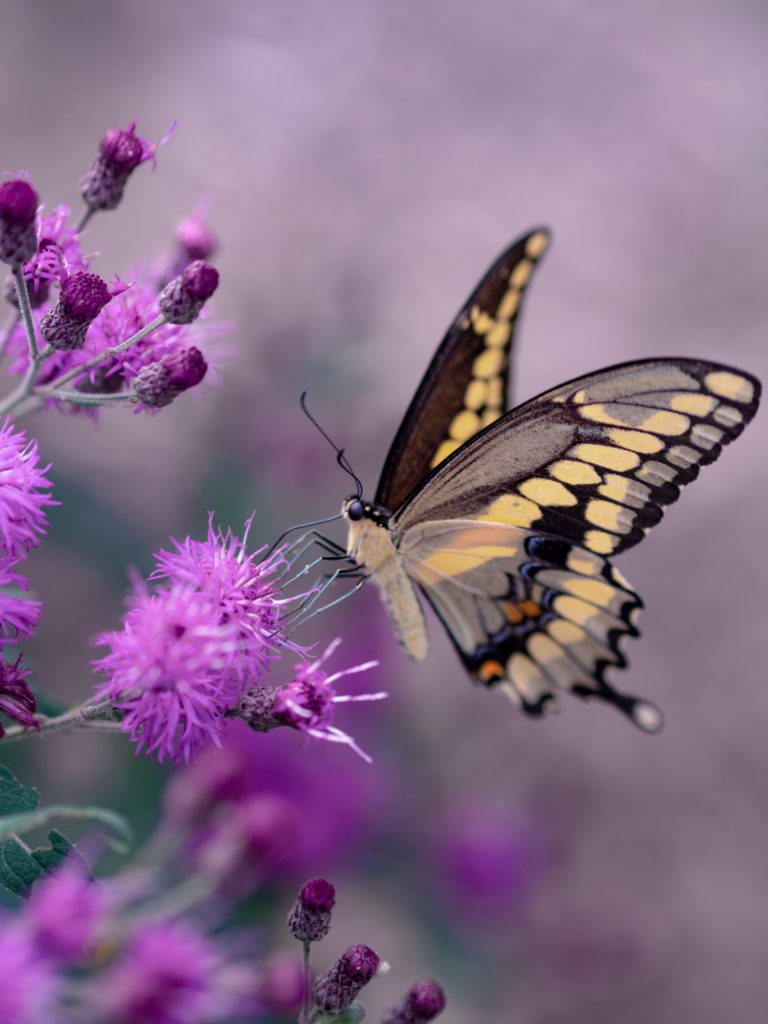 Butterfly landing on a flower symbolizing psychic healing.