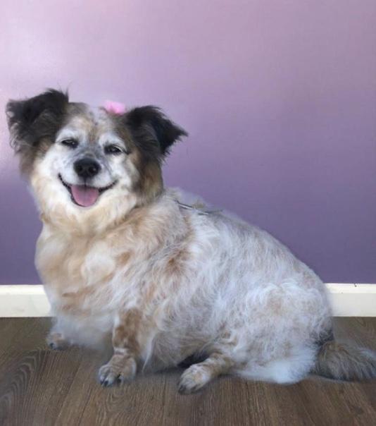 Dr. Linda Salvin's Faithful Companion, a dog named Penny.